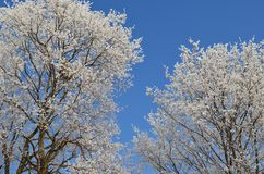 Tree branches covered with hoarfrost against a blue sky 2 royalty free stock photography