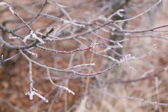 Tree branches covered with hoarfrost Royalty Free Stock Photo