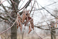 Tree branches covered with hoarfrost Stock Photos