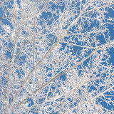 Tree Branches Covered in Hoarfrost. Looking up at birch tree branches covered in hoarfrost against a deep blue sky Royalty Free Stock Photography