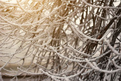 Tree branches covered with hoarfrost Royalty Free Stock Images