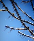 Tree Branches Covered in Ice Stock Photos