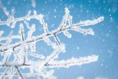 Tree branches covered with ice crystals against a blue sky and falling snow stock photos