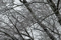 Tree Branches Covered in Ice after Winter Storm. Tree branches are covered in ice after a winter storm hit the eastern part of the United States stock photo