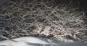 Tree branches covered with snow.  stock video