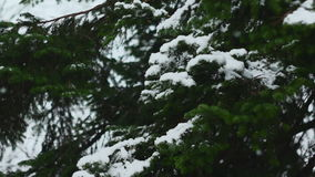 Tree Branches Covered With Snow 01.  stock video footage