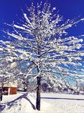 Tree branches covered snow with blue sky background royalty free stock photo