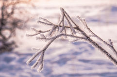 The tree branches covered by the snow Stock Photos