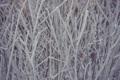Tree branches covered with snow, frozen winter Royalty Free Stock Photo