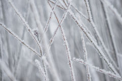 Tree branches covered with snow, frozen winter Stock Image