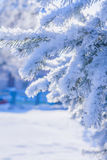 Tree branches covered with snow Royalty Free Stock Image