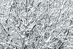 Tree branches covered with snow Stock Images
