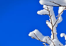 Tree branches covered with snow Stock Photo