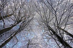 Tree branches covered with white frost. Against a blue sky Royalty Free Stock Photos