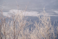 Tree branches covered with white frost Royalty Free Stock Photography