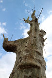 Tree with branches cut off Stock Image