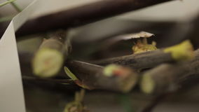Tree branches, that are cut into small pieces, lie on table. stock video footage