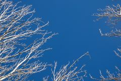 Tree branches with the background sky Stock Photography