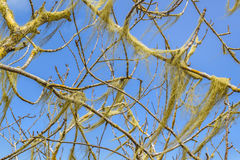 Tree Branches Detail View. Detail view of forest tree branches Royalty Free Stock Images