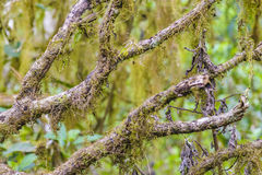 Tree Branches Detail View. Detail view of forest tree branches Stock Images