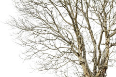 Tree branches drought Stock Image