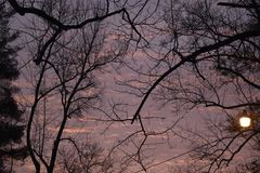 Tree branches at dusk. Silhouetted tree branches at dusk royalty free stock photos