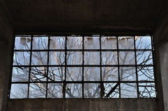Tree branches factory window Royalty Free Stock Images
