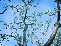 Tree Branches with a Few Leaves in Blue Sky. During daytime Stock Image