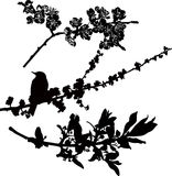 Tree branches in flower. Bird starling vector illustration