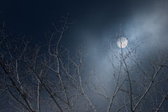 Tree branches in a foggy full moon night Royalty Free Stock Photo