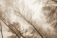 Tree branches in foggy morning Royalty Free Stock Image