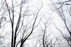 Tree branches in foggy morning Stock Photos