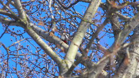 Tree branches in front of blue sky. Bird on branch. Tree bird stock video