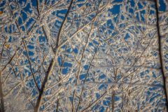 Tree branches in the frost against the sky, closeup stock photography