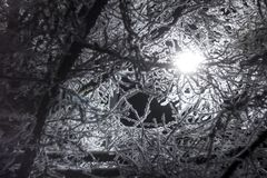 Tree branches in the frost on the background of a night lantern stock images
