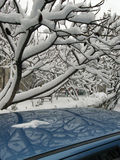 Tree branches full of snow royalty free stock image