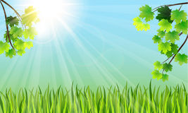 Tree branches, grass and the sun Royalty Free Stock Image