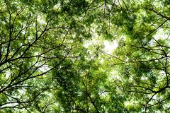 Tree branches and green leaf background, Safe the earth Royalty Free Stock Photography
