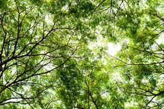 Tree branches and green leaf background, Safe the earth Royalty Free Stock Photo