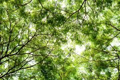 Tree branches and green leaf background, Safe the earth Royalty Free Stock Image