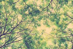 Tree branches and green leaf background, Safe the earth Royalty Free Stock Images