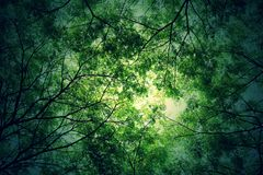 Tree branches and green leaf background, Safe the earth Stock Image