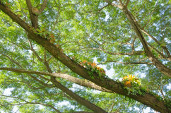 Tree branches and green leaves on blue sky Royalty Free Stock Photography