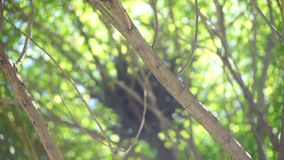 Tree branches with green leaves. Clip stock footage