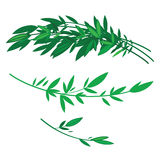 Tree branches with green leaves Royalty Free Stock Photos