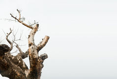 Tree branches growing up. Tree branches expanding into sky with free space on right Royalty Free Stock Images