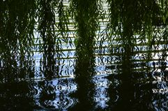 Tree branches hang over the water stock photography