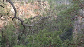 Tree branches hanging over the canyon cliff mountains in the background.  stock video footage