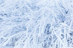 Tree branches in heavy hoarfrost textured. Evaporation in winter concept. Hoarfrost texture close-up royalty free stock photography