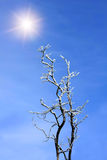 Tree branches with hoarfrost Royalty Free Stock Image